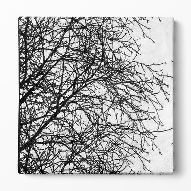 Pappersservett Björk 33×33 cm